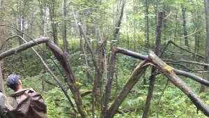 """Сломанные особым образом деревья - """"Солнышко"""""""