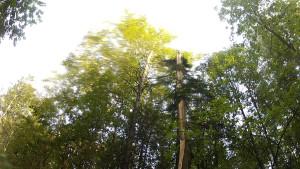 Дерево с воткнутыми в расщелину палками в виде буквы Т